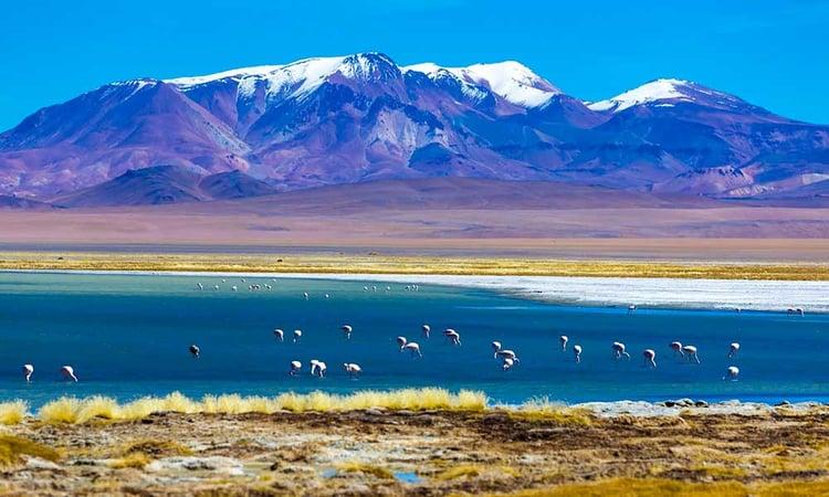 La réserve nationale de Los Flamencos