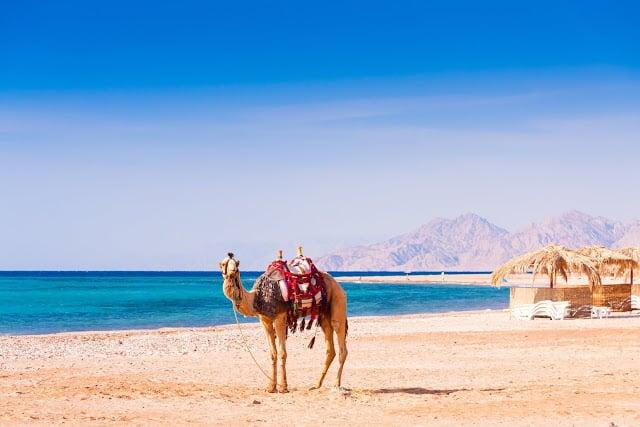 Hurghada & dromadaire en Égypte