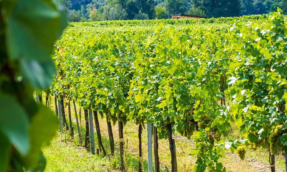 Vignoble de la vallée de Wachau