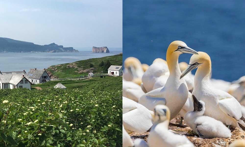 Voyages-Traditours-Gaspesie-Ile-Bonaventure-Fous-bassan