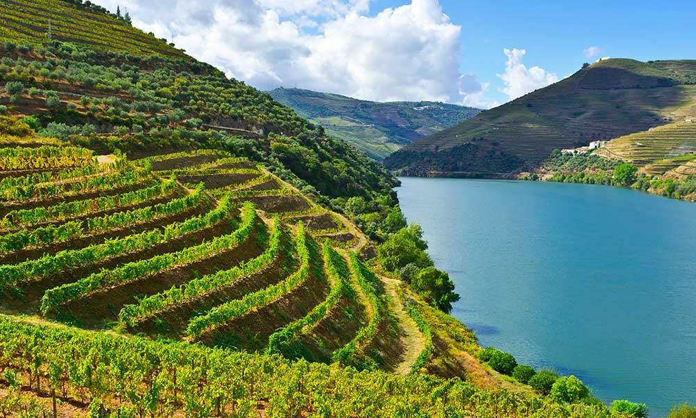 Voyages-Traditours-Portugal-Douro-vignes-terrasse