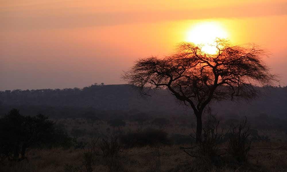 Voyages-Traditours-Safari-Tanzanie
