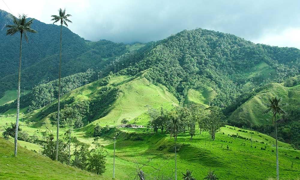 Colombie-embleme-palmier-cire