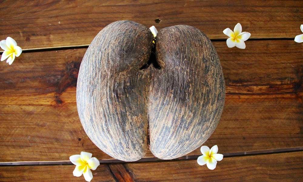 Seychelles-embleme-coco-mer