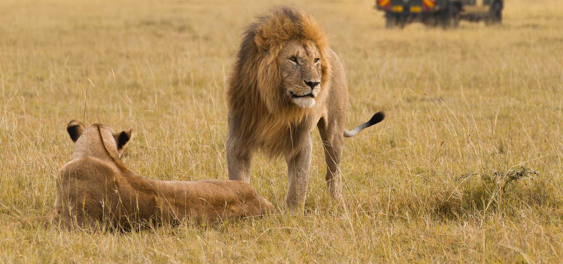 Bannière-Afrique du Sud-safari
