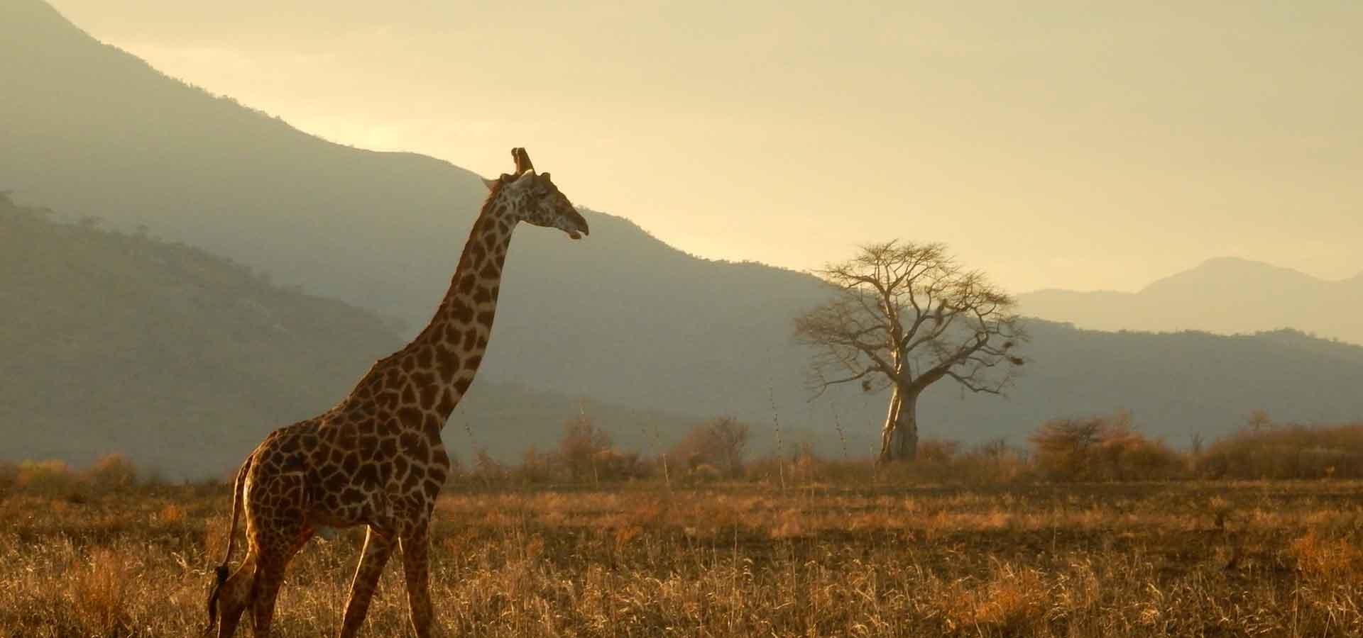 Un safari au cœur de l'Afrique de l'Est